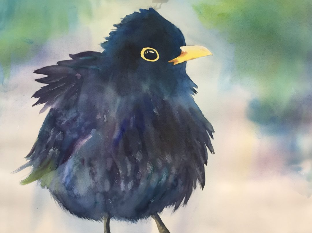 Black Bird Baby